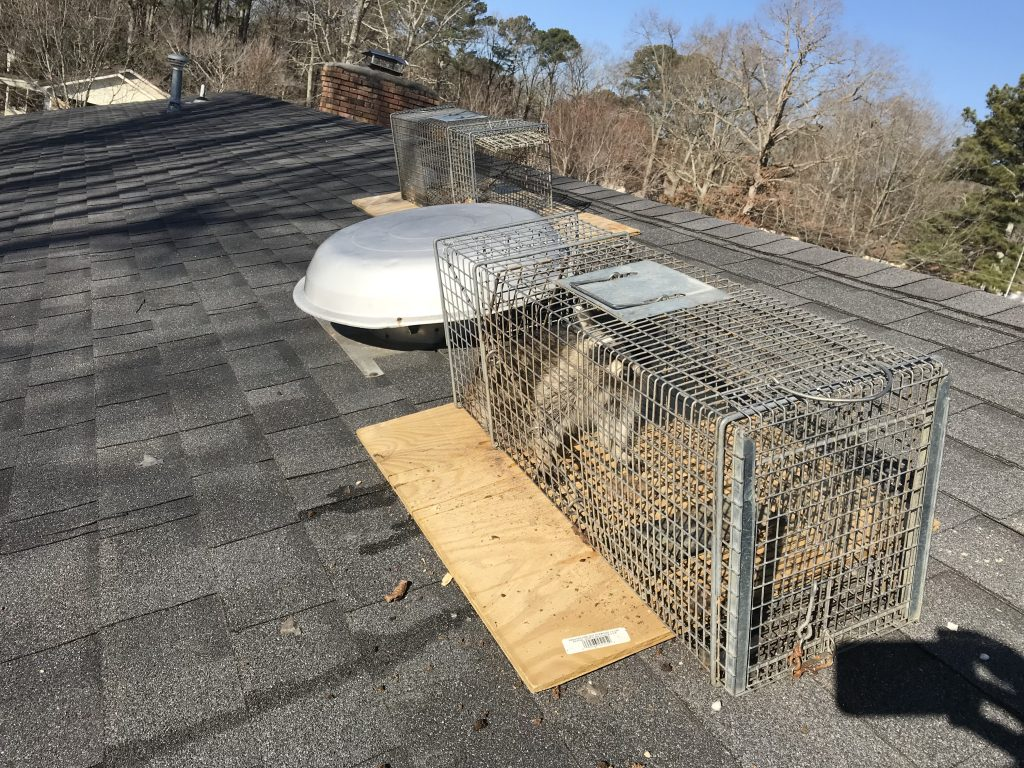 Wildlife Removal, Repair and Exclusion